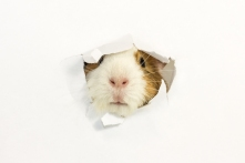 Rodent Ate A Hole In A Paper.